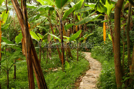 stone pathway through jungle