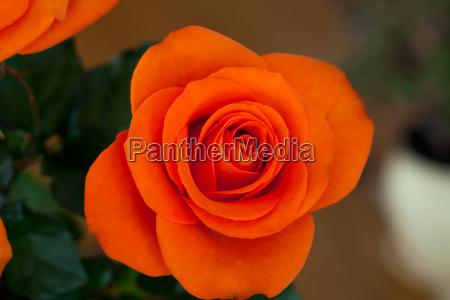 close up image of single orange