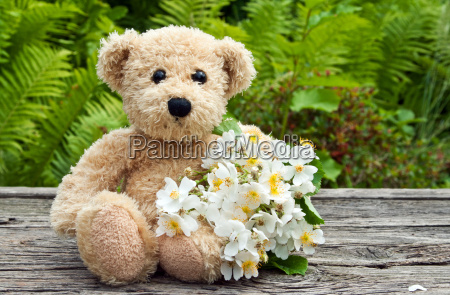 roses rose white green teddy bear