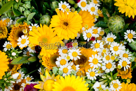 colorful mixed fresh flowers on the