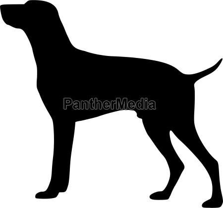 hound german shorthair vector