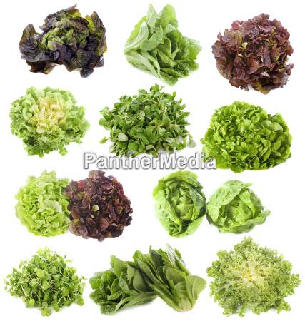 varieties of salads