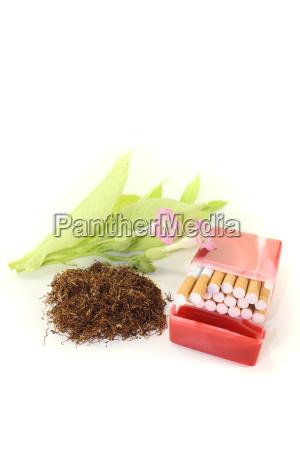 tobacco cigarette leaves and blossom