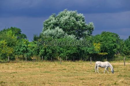 landscape with horse rain mood