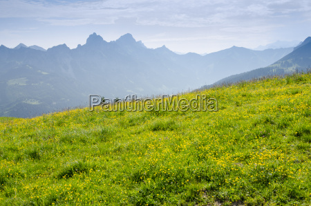 green meadow with yellow flowers and