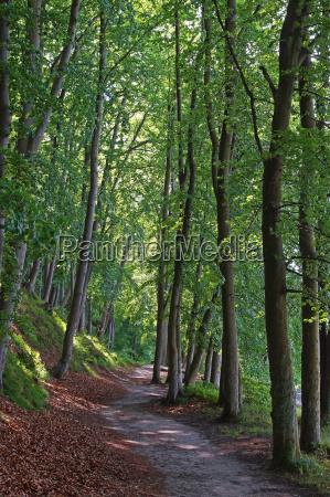 buchenwald ruegen