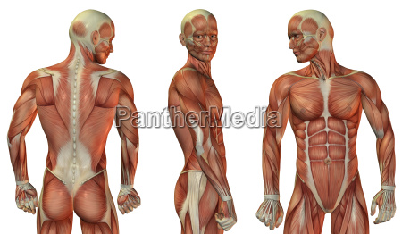 muscle build up head and upper