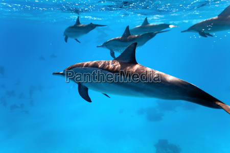 dolphins, in, the, sea - 9750352