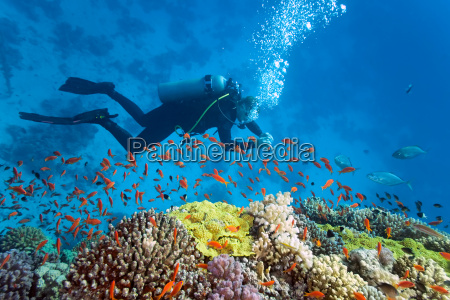 diver, on, the, reef - 9782338