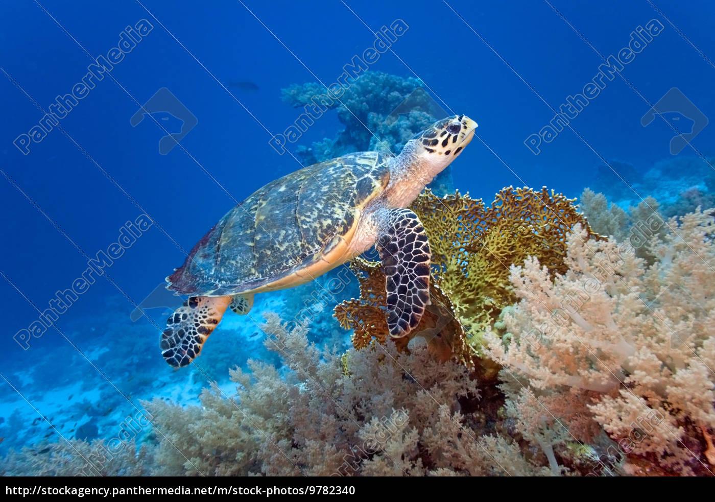 sea, turtle - 9782340