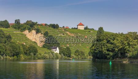 vineyards along the river neckar in