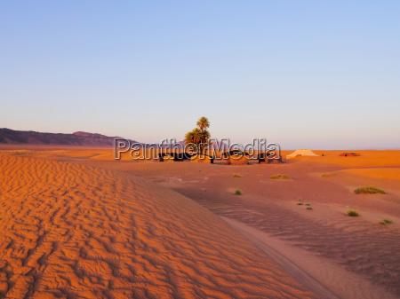 oasis on the desert morocco