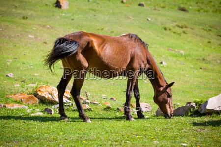 feeding bay horse