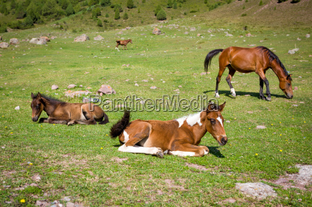 horses on th pasture