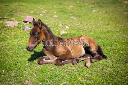 cute foal on the grass