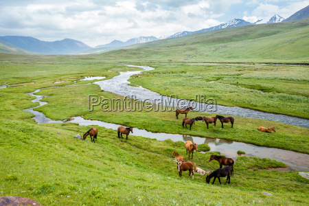 grazing horses in the mountains