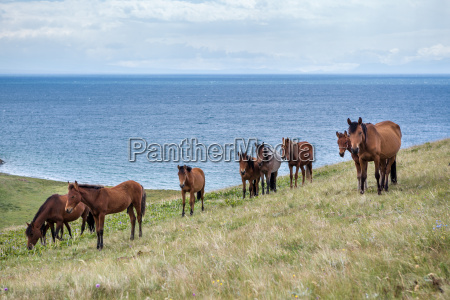 horses pasturing at the lake