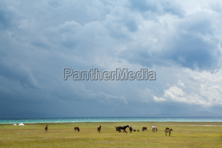 herd of horses under stormy sky
