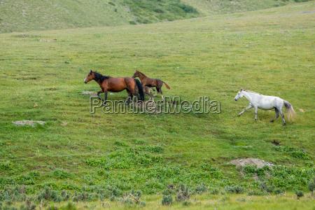 herd of horses running in the