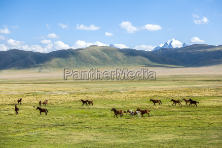 group of horses in mountains