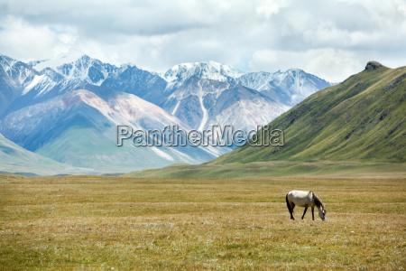 horse feeding grass in mountains