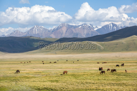 group of horses pasturing in mountains