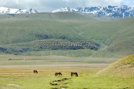 three horses grazing near stream in
