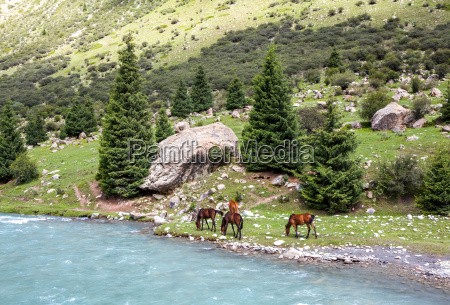 four horses grazing at blue mountain