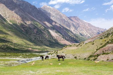 three brown horses