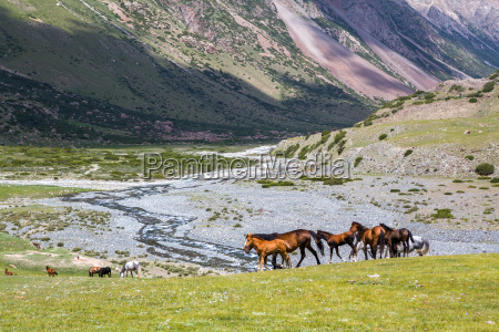 group of horses with colts
