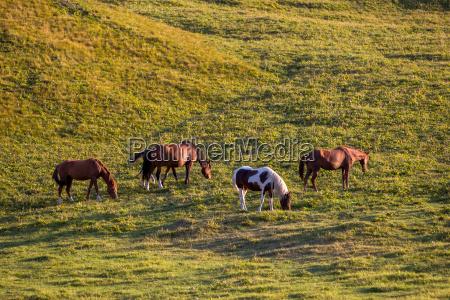 group of horses feeding grass