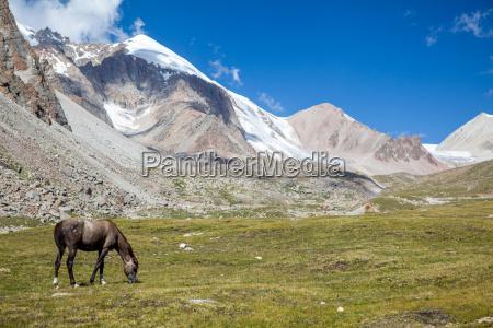 horse grazing near glacier