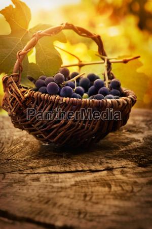 black, grapes - 10023798