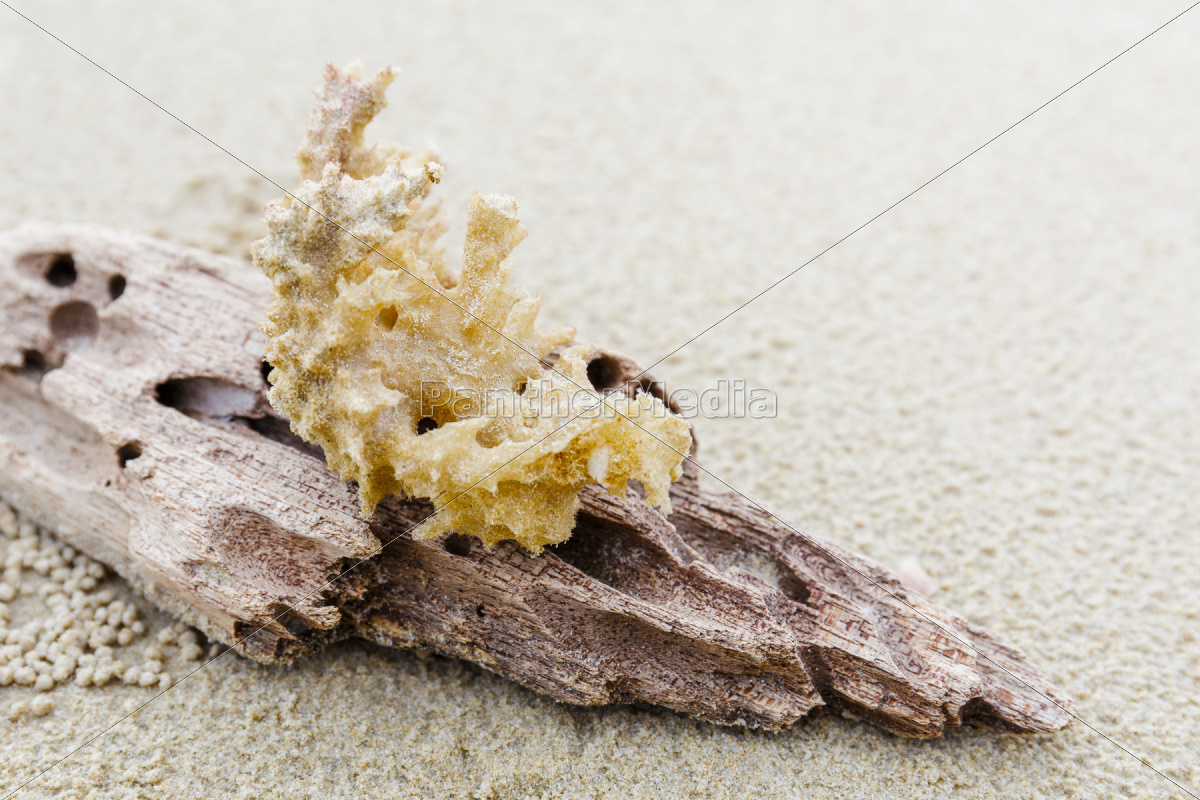 driftwood, and, coral, on, beach - 10042498