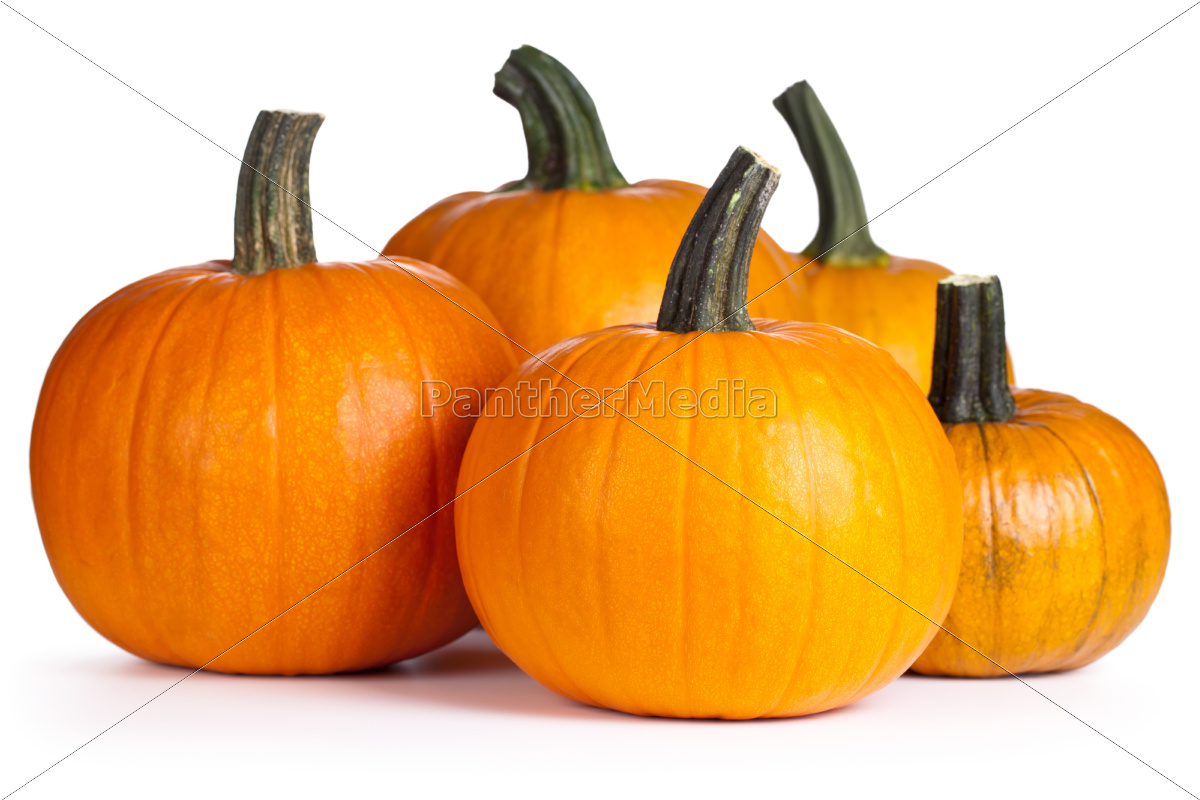 isolated, pumpkin, squash, backdrop, background, white - 10048540