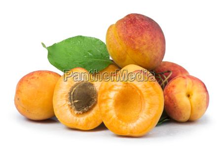 apricots and leaf white isolated