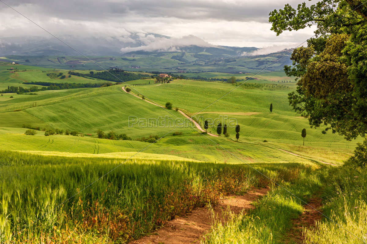 tuscany, hilly, landscape, near, pienza, , italy - 10059340