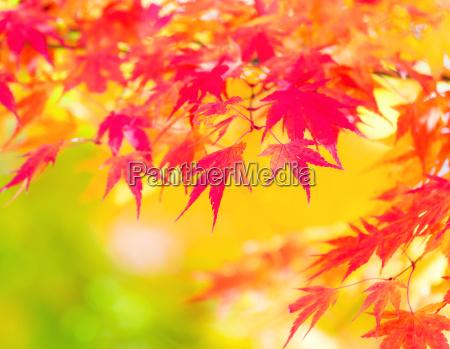 leaf, detail, environment, enviroment, colour, jungle - 10065066