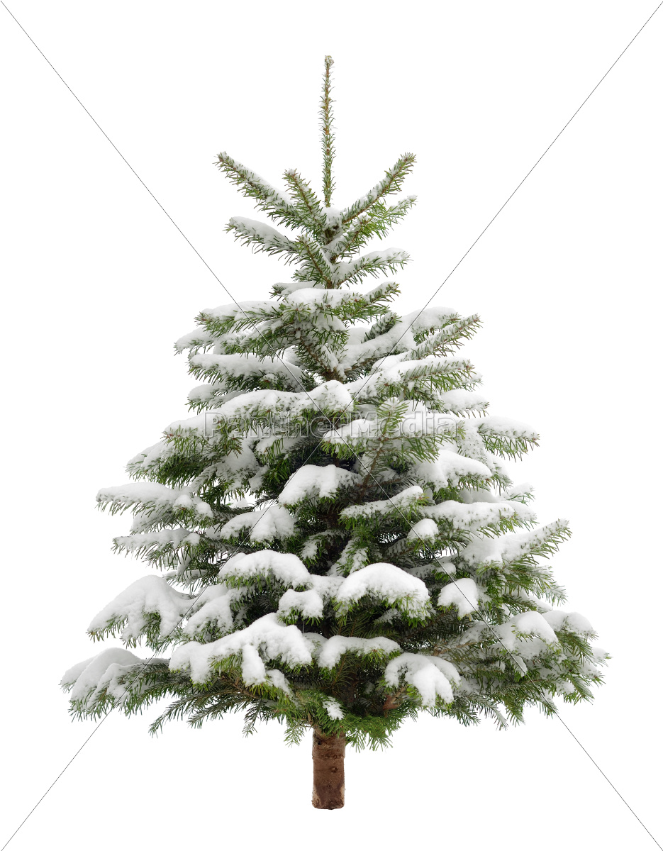 perfect, snowy, christmas, tree, isolated - 10070402