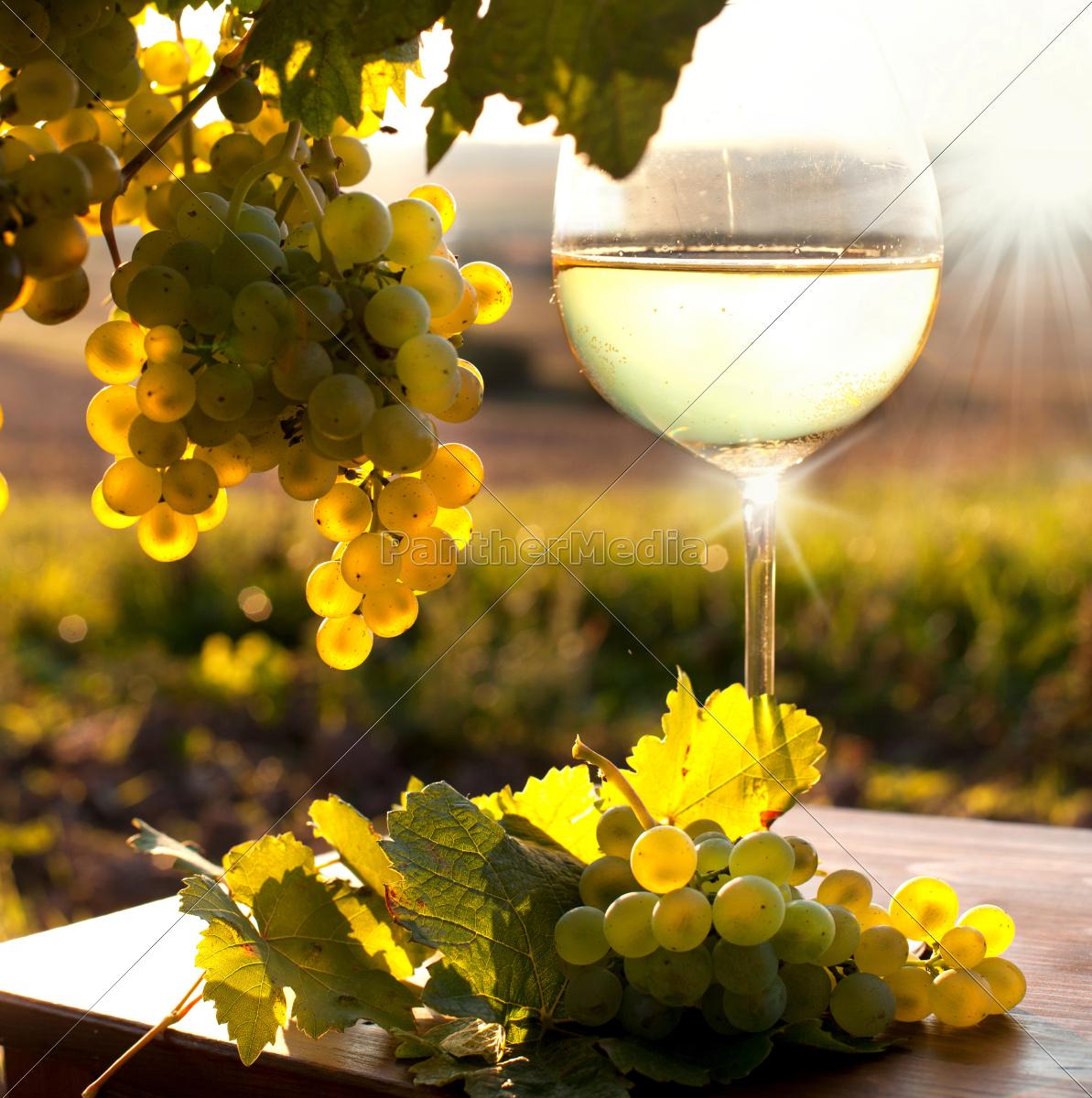 vine, in, autumn - 10092144