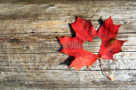 maple-leaf, to, cut, the, heart - 10104825