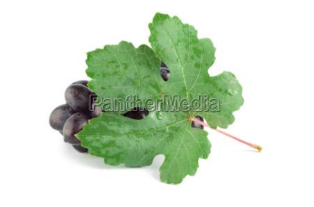 ripe blue grape