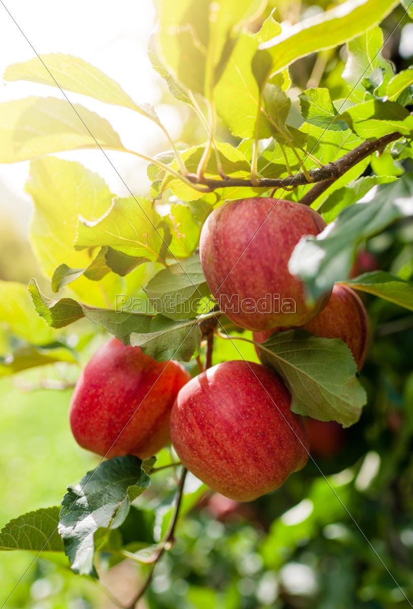 food, aliment, leaf, macro, close-up, macro admission - 10113493