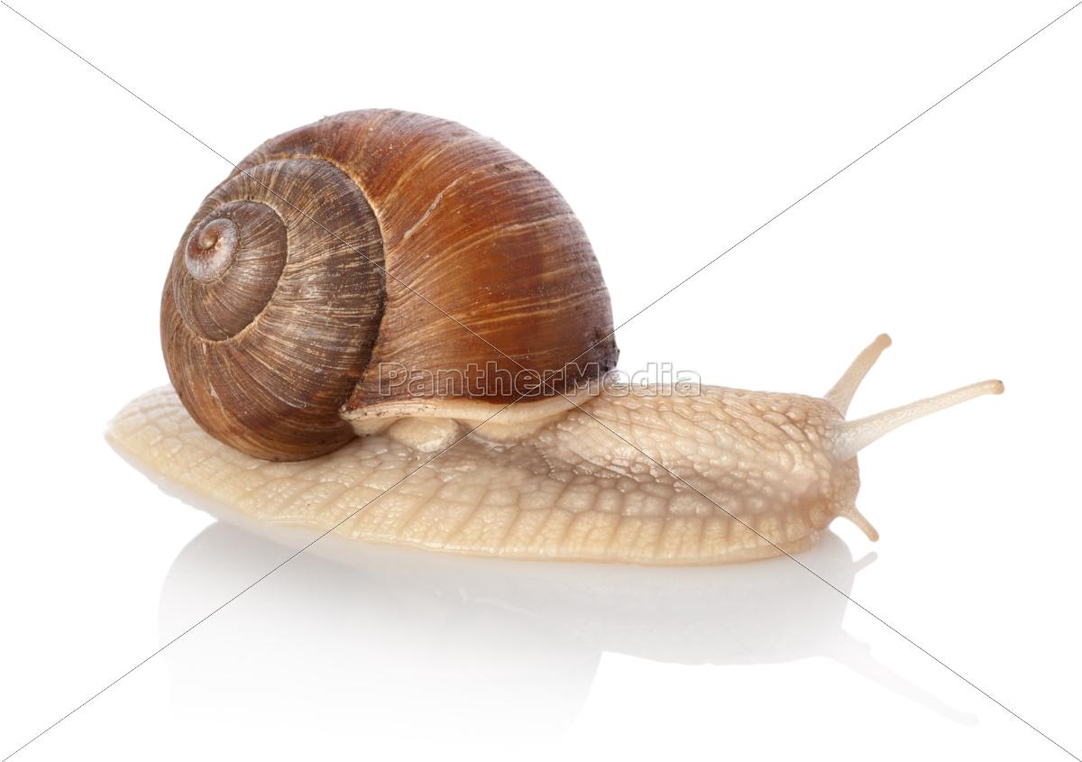 crawling, snail - 10116307