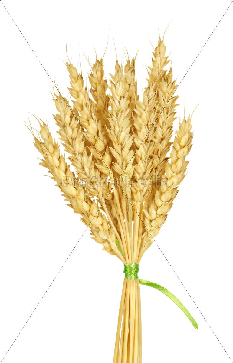 wheat, stems - 10121883