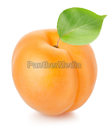 apricot, with, leaf - 10122741