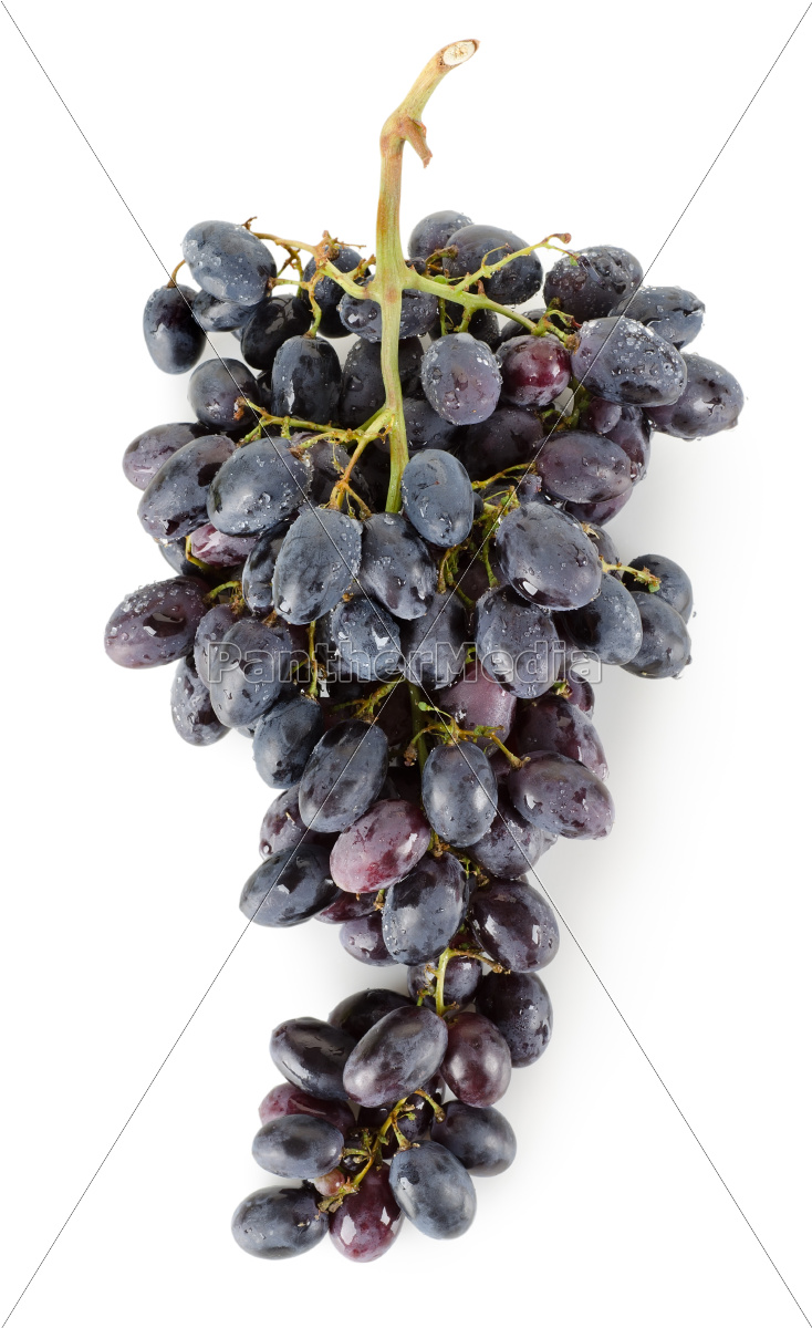 bunch, of, blue, grapes - 10123425