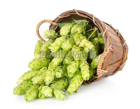 hops, in, a, wooden, basket - 10123451