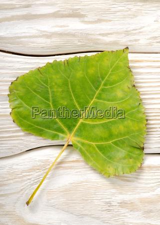 poplar, leaf, on, a, wooden, background - 10124745