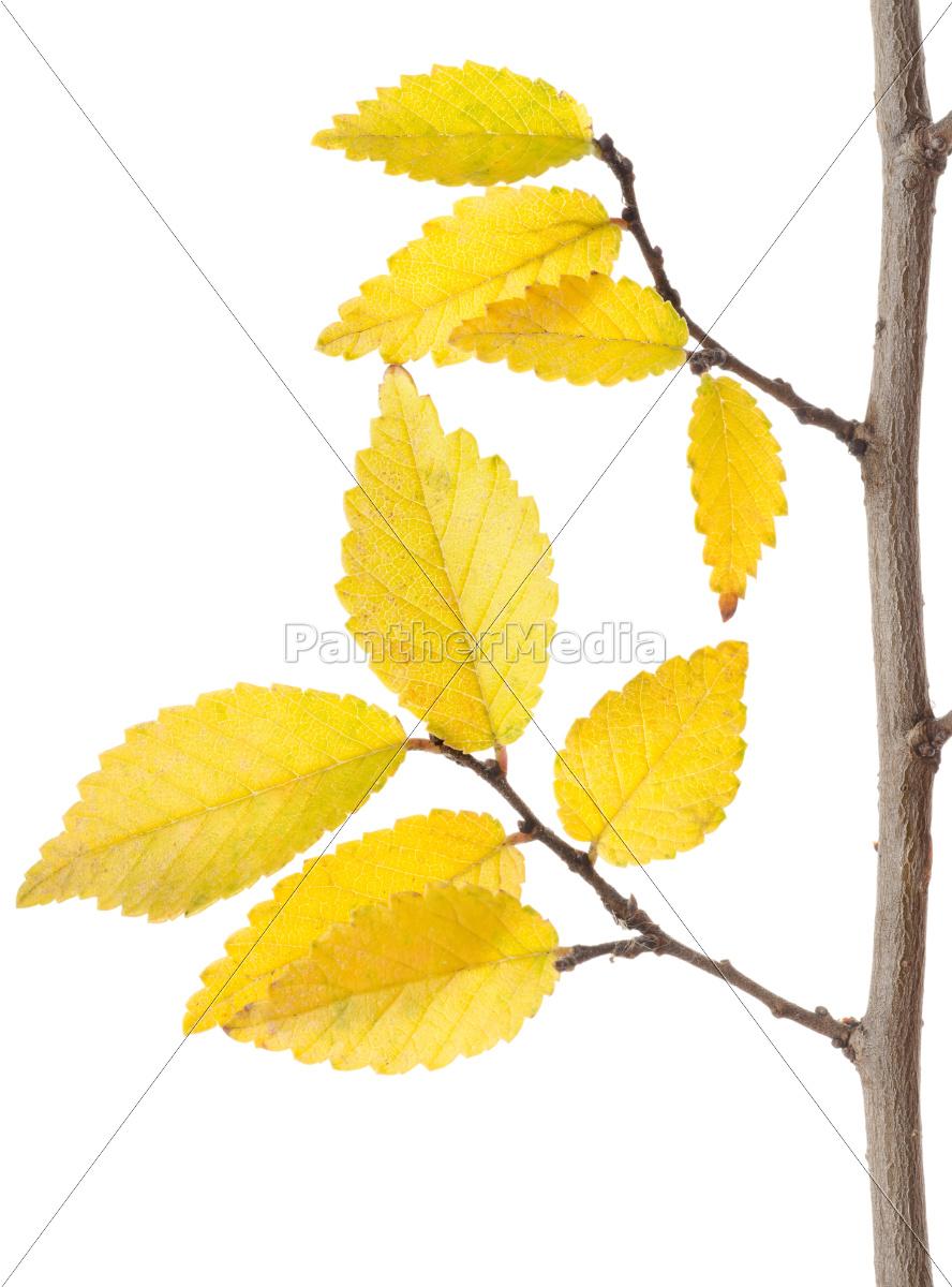yellow, autumn, branch - 10124877